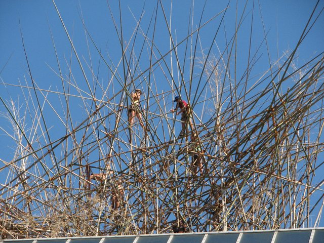 "Workers on Met. roof installing ""Big Bambú: You Can't, You Don't, and You Won't Stop"""