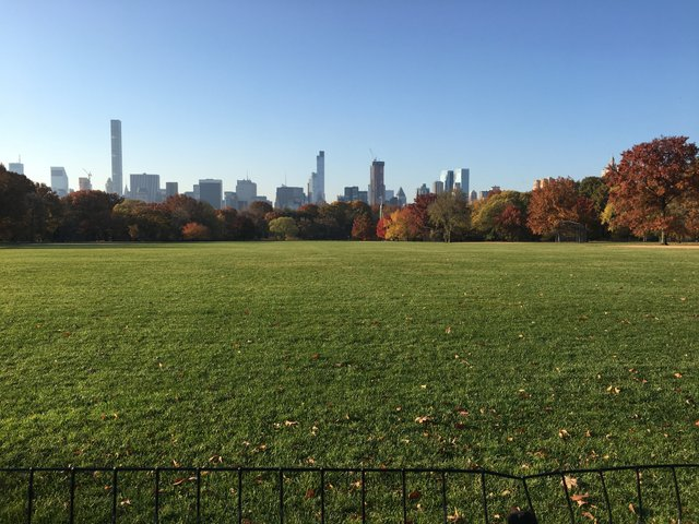 Great City Great Lawn