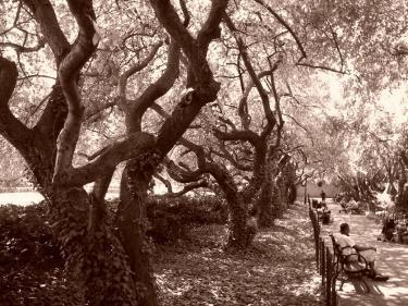 trees.jpg.jpe
