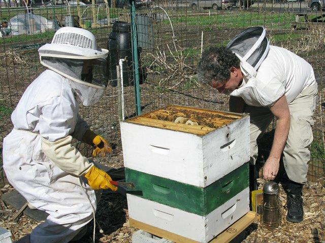 bees.jpg.jpe