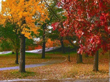Fall Colors of Central Park