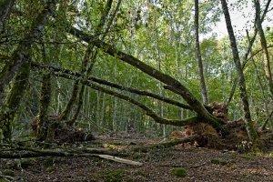 fallen_trees.jpg.jpe