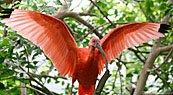 ibis.jpg.jpe