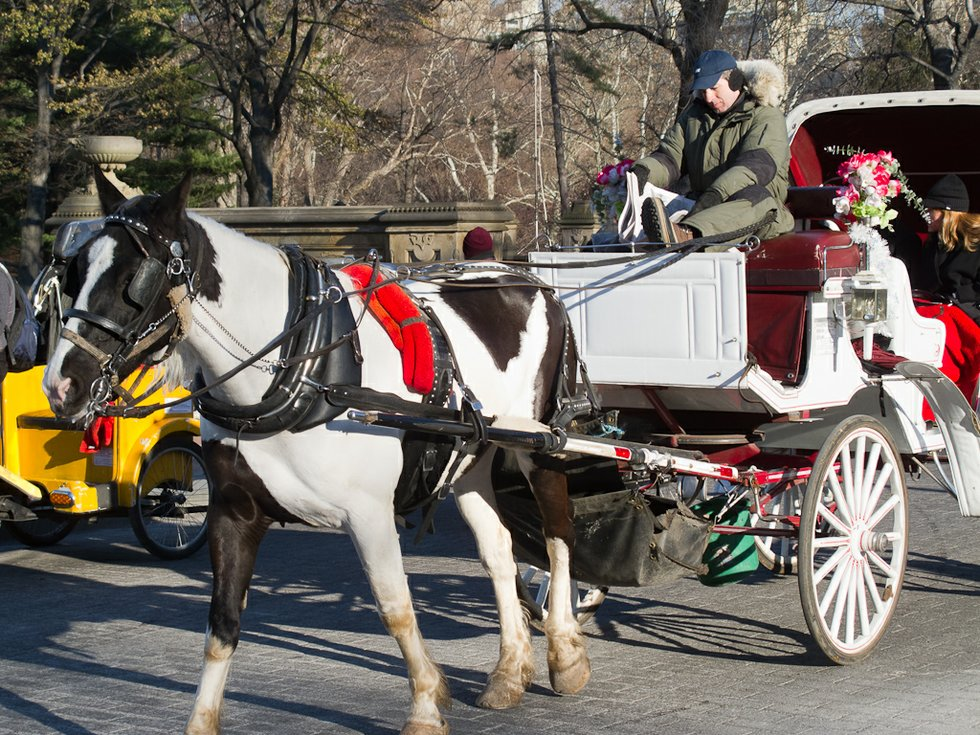 horse and carriage rides in central park. Black Bedroom Furniture Sets. Home Design Ideas