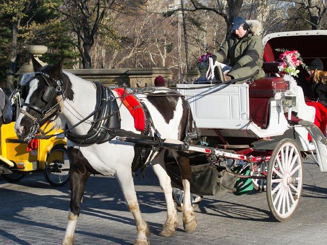 horse_carriage_2.jpg.jpe