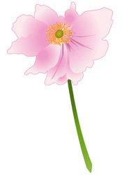 japanese-anemone.jpg.jpe