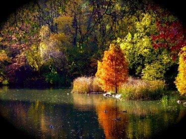 Sunny Fall II