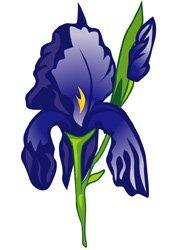 iris.jpg.jpe