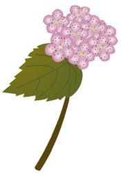 spiraea-japonica.jpg.jpe