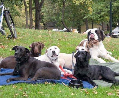 cp-dogs-2.jpg.jpe