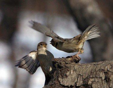 Sparrow`s