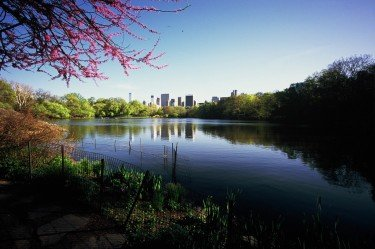 Spring Colors in Central Park 1