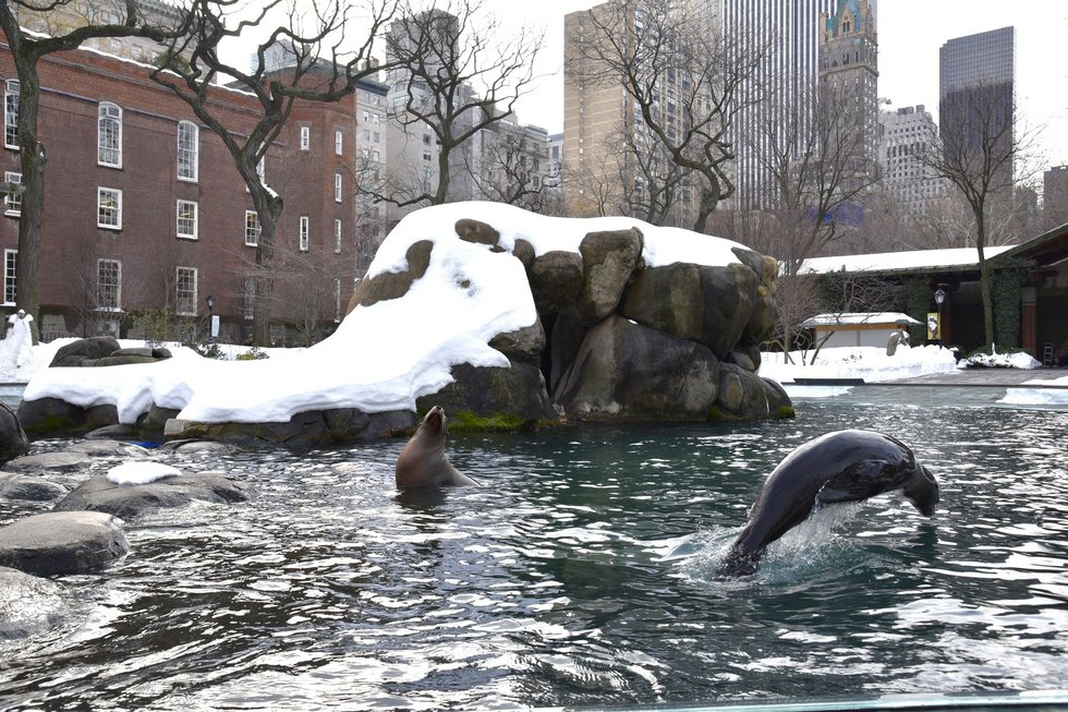 Citaten Winter Zoo : Winter is a perfect time to visit the central park zoo