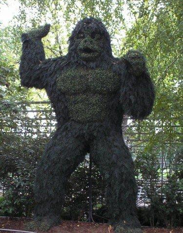 Gorilla at the Tavern
