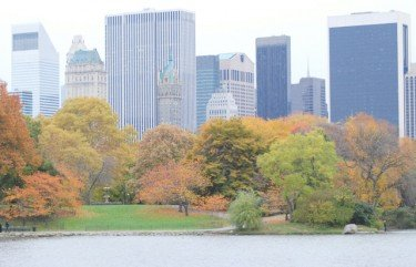 Picture of Foilage Taken At Central Park Lake and 59th Street Skyline View