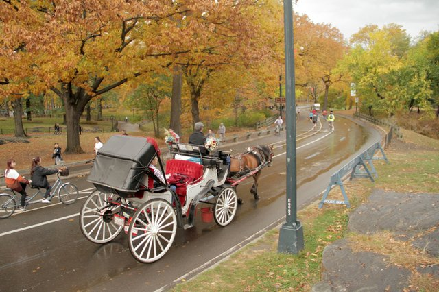 carriage rides in central park park imghd co. Black Bedroom Furniture Sets. Home Design Ideas
