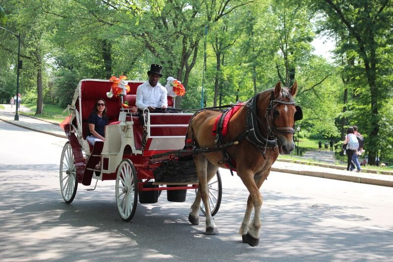 Horse Driving Garden Party Dresses