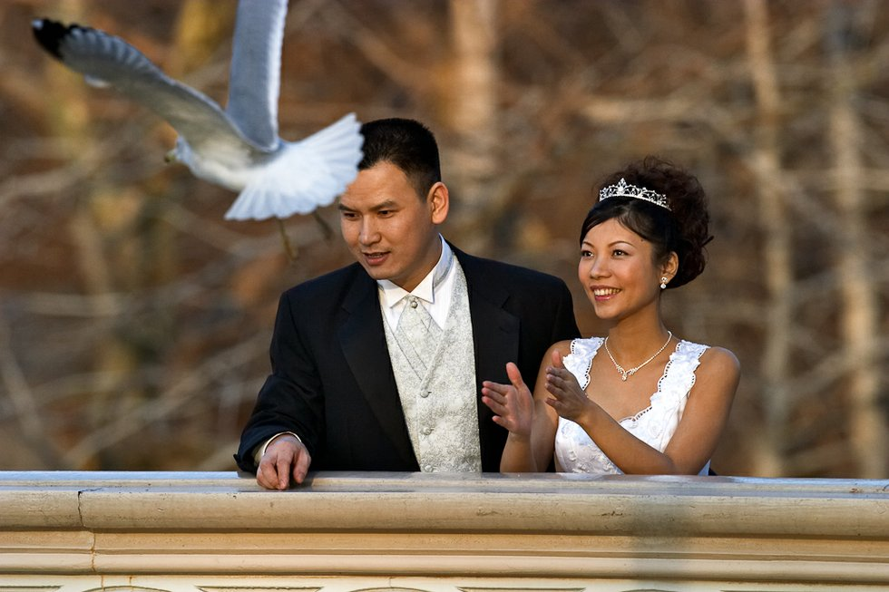 Wedding Pigeon