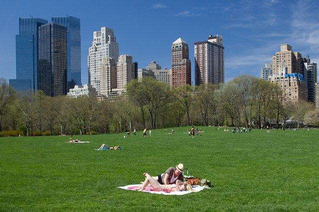 Sunbathing Sheep Meadow.jpg