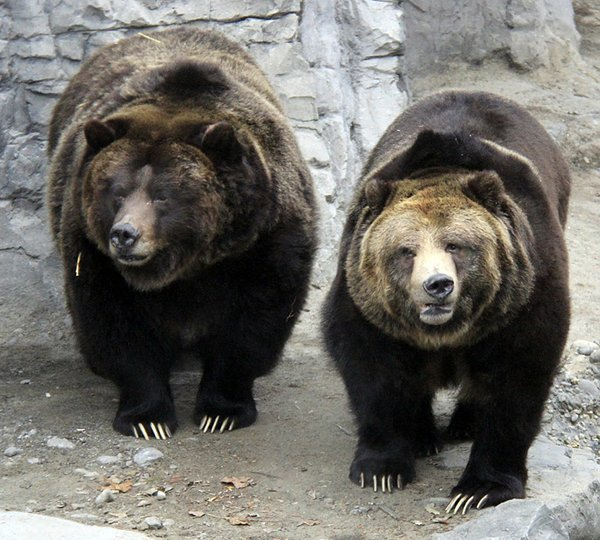 Grizzly Bears -Betty and Veronica.jpg