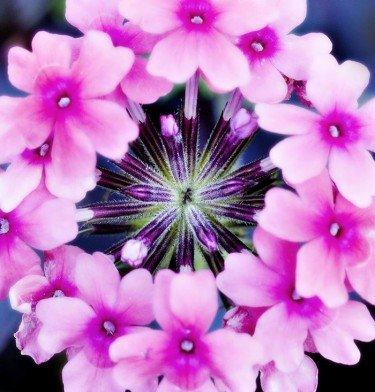 Conservatory Flower