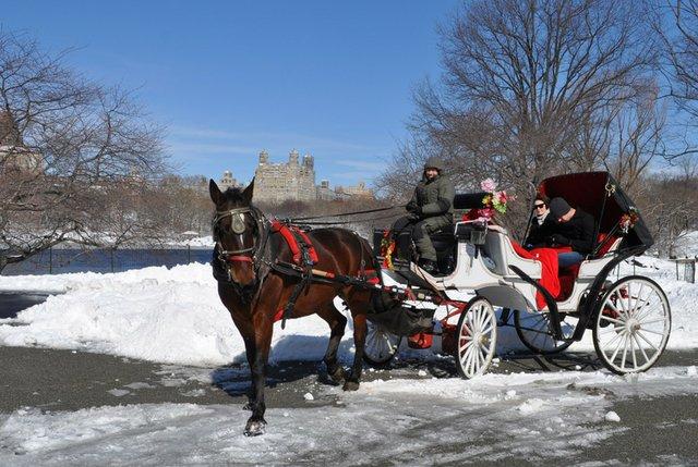 Central Park Horse and Carriage Rides | CentralPark.com