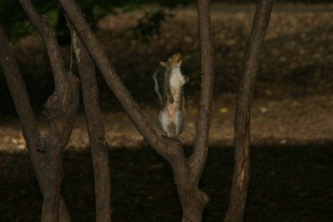 Squirrel before jump