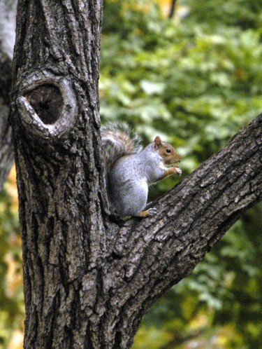 Tremendous Photo Entry Squirrel At Home Beutiful Home Inspiration Ommitmahrainfo