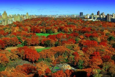 Central Park Late Fall
