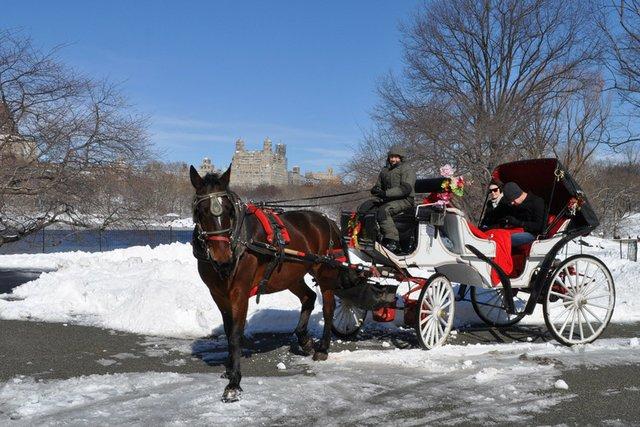 horse carriage winter.jpg