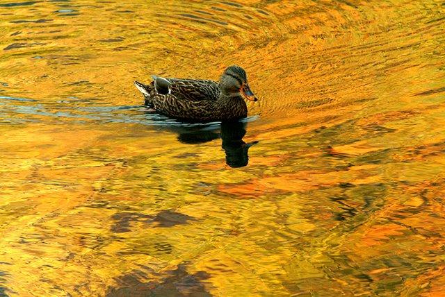 Old Golden Pond
