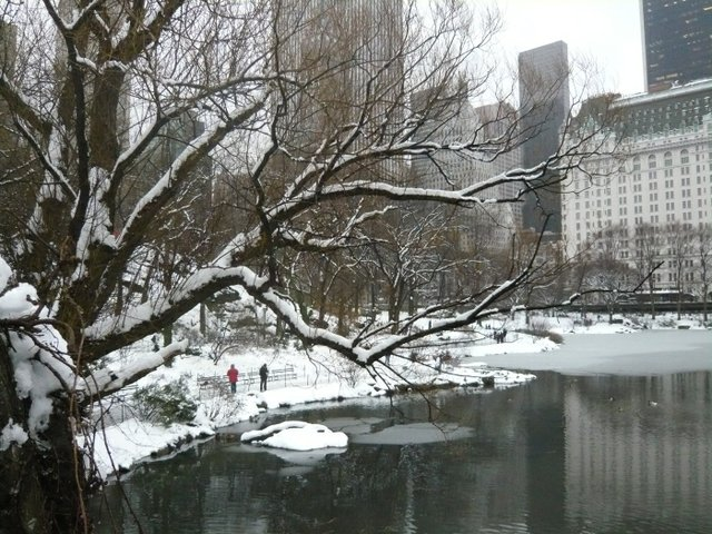 Winter on Central Park